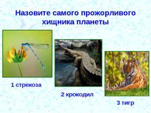 Назовите самого прожорливого хищника планеты 1 стрекоза 2 крокодил 3 тигр