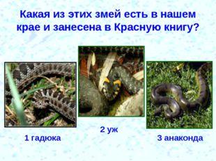 Какая из этих змей есть в нашем крае и занесена в Красную книгу? 1 гадюка 2 у