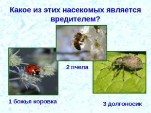 Какое из этих насекомых является вредителем? 1 божья коровка 2 пчела 3 долгон