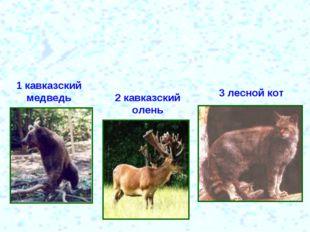 1 кавказский медведь 2 кавказский олень 3 лесной кот