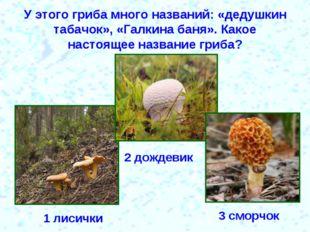 У этого гриба много названий: «дедушкин табачок», «Галкина баня». Какое насто