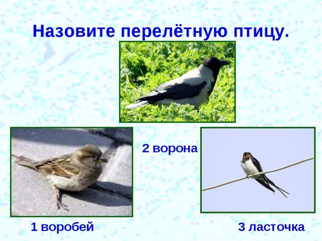 Назовите перелётную птицу. 1 воробей 2 ворона 3 ласточка