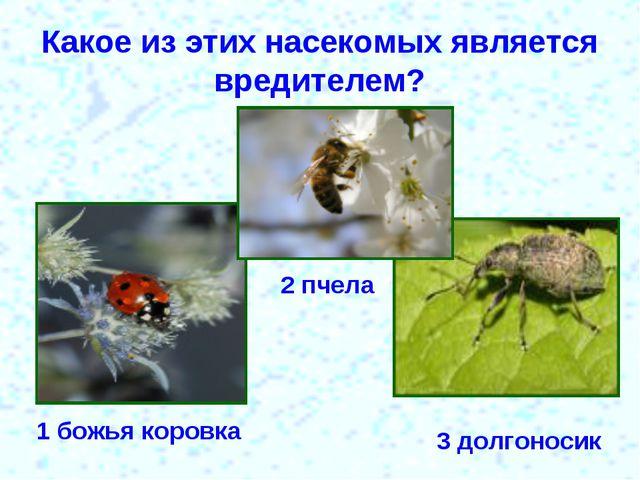 Какое из этих насекомых является вредителем? 1 божья коровка 2 пчела 3 долгон...