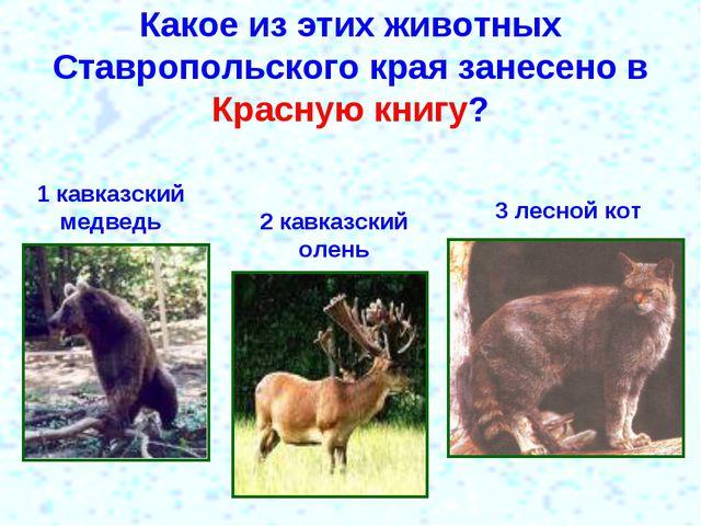Какое из этих животных Ставропольского края занесено в Красную книгу? 1 кавка...