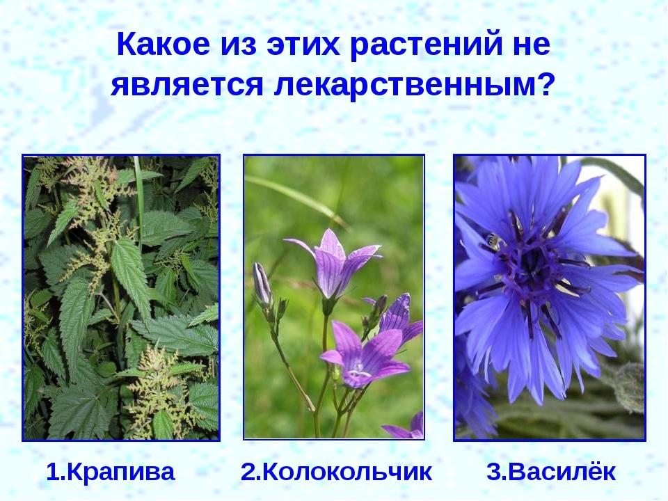 Какое из этих растений не является лекарственным? 1.Крапива 2.Колокольчик 3.В...