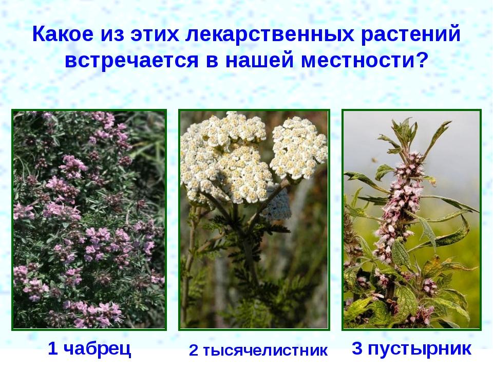 Какое из этих лекарственных растений встречается в нашей местности? 1 чабрец...