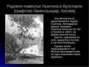 Эта яблоня была единственной в садике Ньютона. Легендарное дерево пережило Нь
