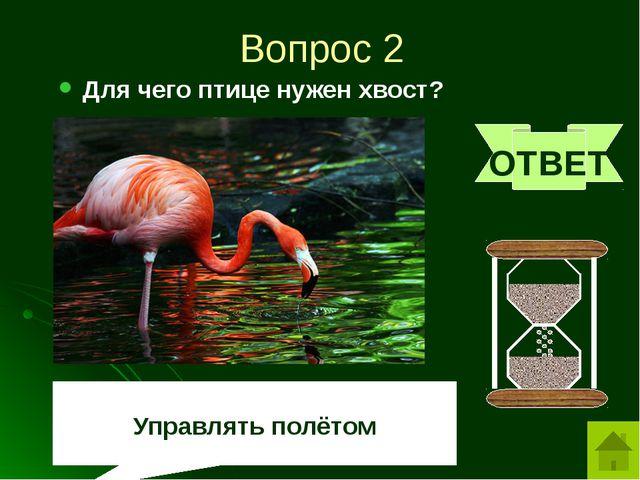 Вопрос 3 Какой хищный зверь любит малину? ОТВЕТ медведь