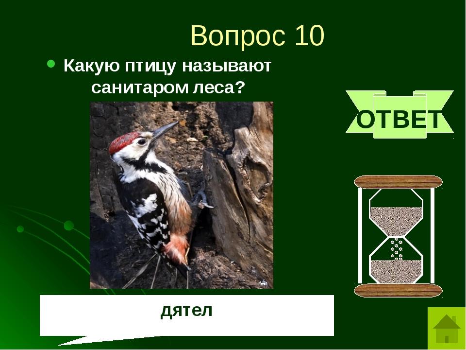 Вопрос 12 Хвойное дерево, которое на зиму сбрасывает хвою? ОТВЕТ лиственница