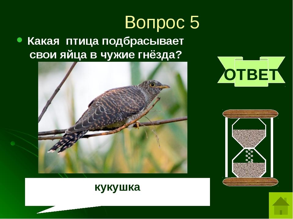 Вопрос 6 За что сову называют «лесной кошкой»? ОТВЕТ Ловит мышей