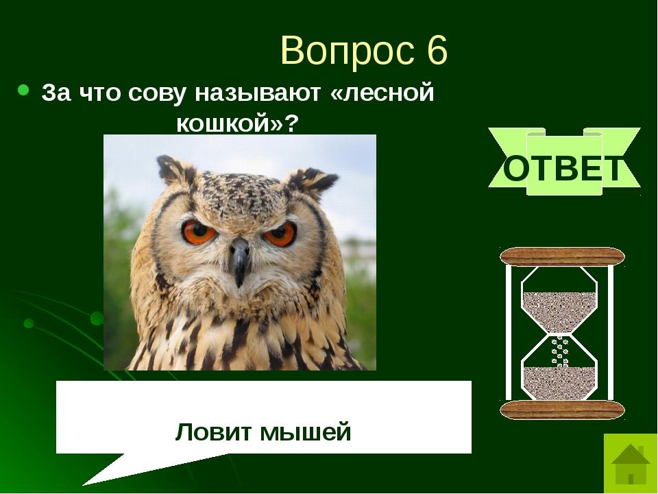 Вопрос 8 Назовите животное, любимое лакомство аистов и цапель. ОТВЕТ лягушка
