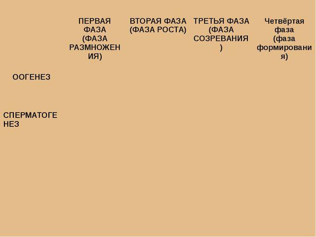 ПЕРВАЯ ФАЗА (ФАЗА РАЗМНОЖЕНИЯ) ВТОРАЯ ФАЗА (ФАЗА РОСТА) ТРЕТЬЯ ФАЗА (ФАЗА СО...