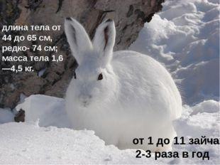 длина тела от 44 до 65см, редко- 74см; масса тела 1,6—4,5кг. от 1 до 11 за