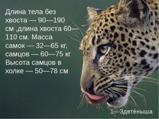Длина тела без хвоста— 90—190 см ,длина хвоста 60—110см. Масса самок— 32—6