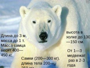 Длина до3м, масса до1т. Масса самца весят 400—450кг, От 1—3 медвежат раз