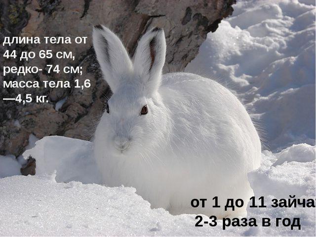 длина тела от 44 до 65см, редко- 74см; масса тела 1,6—4,5кг. от 1 до 11 за...