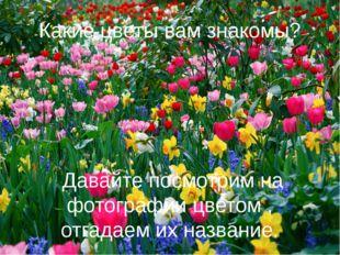 Какие цветы вам знакомы? Давайте посмотрим на фотографии цветом , отгадаем их