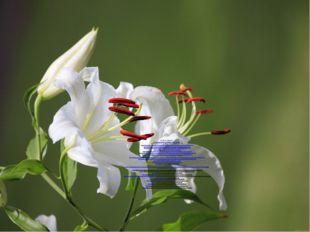 Интернет ресурсы: http://www.ubilya.ru/riddles_about_flowers dtbj7aegs3a2c.xn