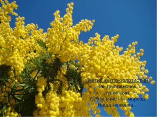 Цветик желто-золотистый, Как цыпленочек, пушистый. Сразу вянет от мороза Наша