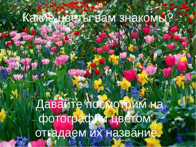 Какие цветы вам знакомы? Давайте посмотрим на фотографии цветом , отгадаем их...