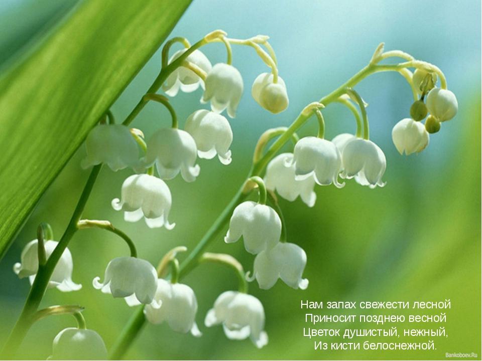 Нам запах свежести лесной Приносит позднею весной Цветок душистый, нежный, Из...