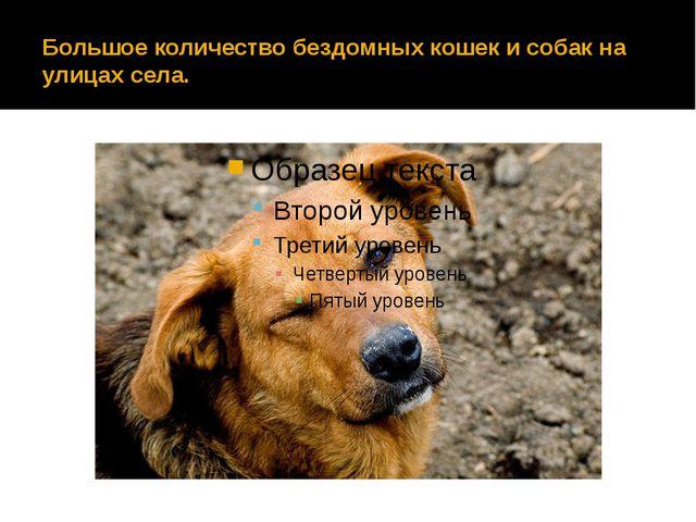 Большое количество бездомных кошек и собак на улицах села.