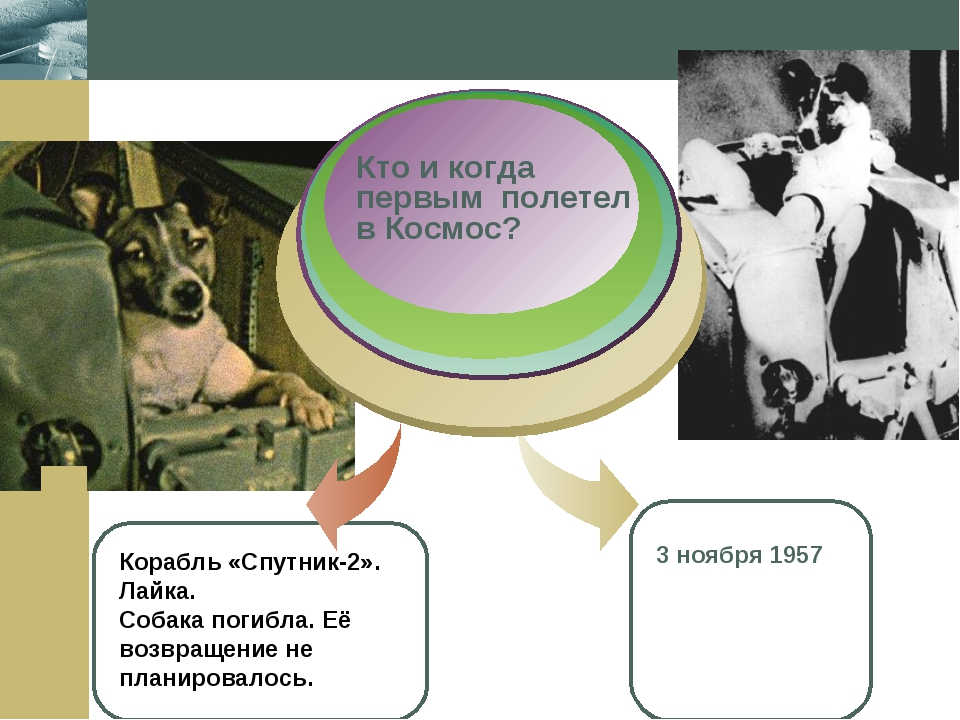 Company Logo Корабль «Спутник-2». Лайка. Собака погибла. Её возвращение не пл...