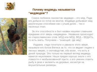 """Почему медведь называется """"медведем""""? Самое любимое лакомство медведя – это"""