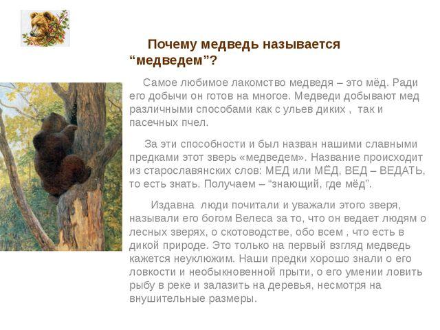 """Почему медведь называется """"медведем""""? Самое любимое лакомство медведя – это..."""