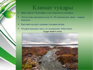 Климат тундры Зима длится 7-8 месяцев, а лето короткое и холодное. Летом почв