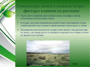 Температура, почва и сильные ветры - факторы влияния на растения Пурга жжёт л