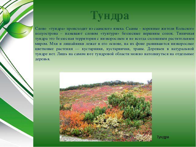 Тундра Слово «тундра» происходит из саамского языка. Саамы – коренные жители...