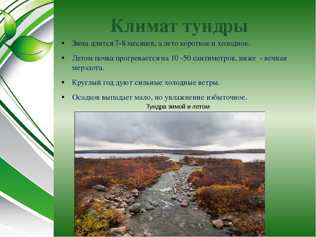Климат тундры Зима длится 7-8 месяцев, а лето короткое и холодное. Летом почв...