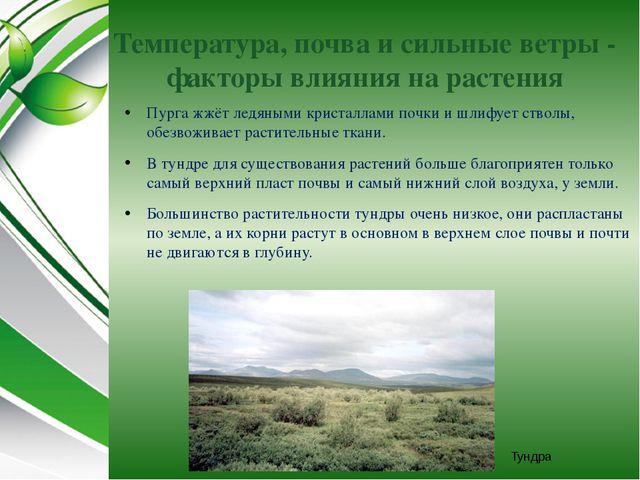 Температура, почва и сильные ветры - факторы влияния на растения Пурга жжёт л...