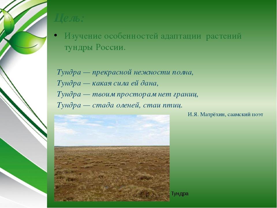 Цель: Изучение особенностей адаптации растений тундры России. Тундра Тундра—...