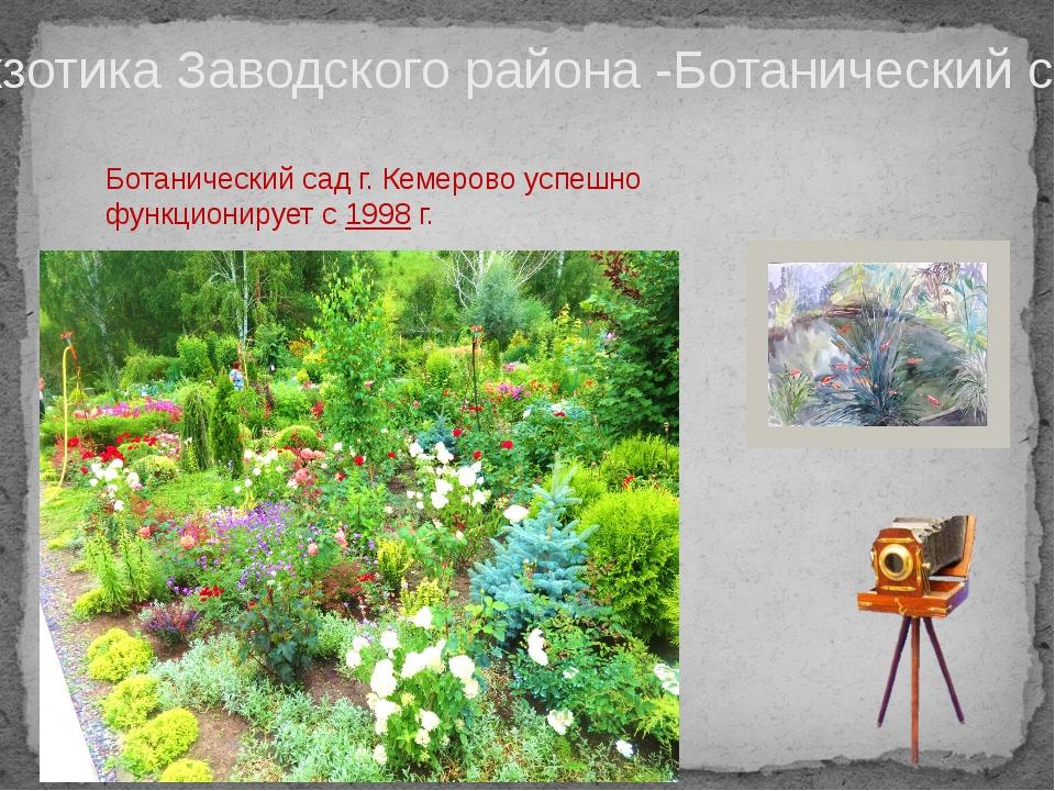 Экзотика Заводского района -Ботанический сад Ботанический сад г. Кемерово усп...