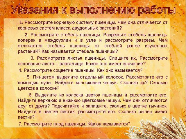 1. Рассмотрите корневую систему пшеницы. Чем она отличается от корневых сист...