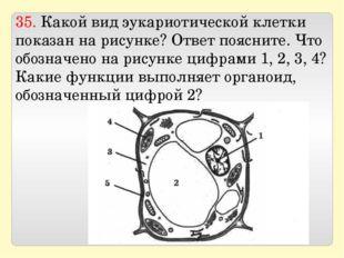 35. Какой вид эукариотической клетки показан на рисунке? Ответ поясните. Что
