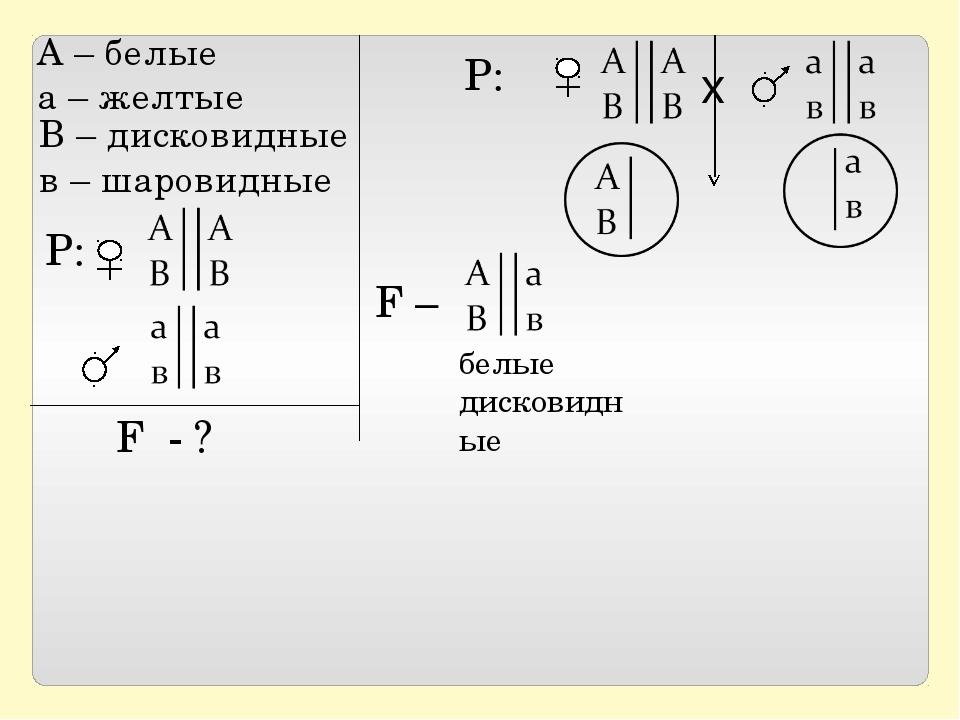 Р: F - ? Р: х F – белые дисковидные А – белые а – желтые В – дисковидные в –...