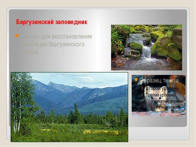 Баргузинский заповедник Создан для восстановления популяции баргузинского со...