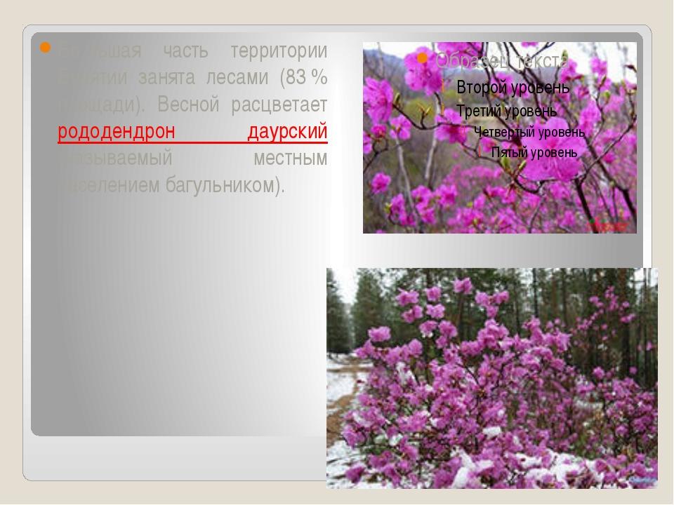 Бо́льшая часть территории Бурятии занята лесами (83% площади). Весной расцв...