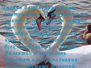 Тысячи влюбленных ждут наступления 14 февраля с не меньшим замиранием сердца