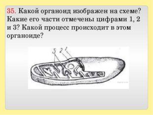 35. Какой органоид изображен на схеме? Какие его части отмечены цифрами 1, 2