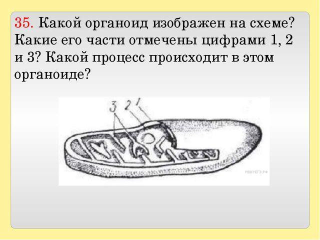 35. Какой органоид изображен на схеме? Какие его части отмечены цифрами 1, 2...