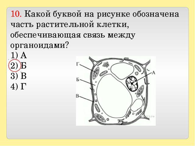10. Какой буквой на рисунке обозначена часть растительной клетки, обеспечива...