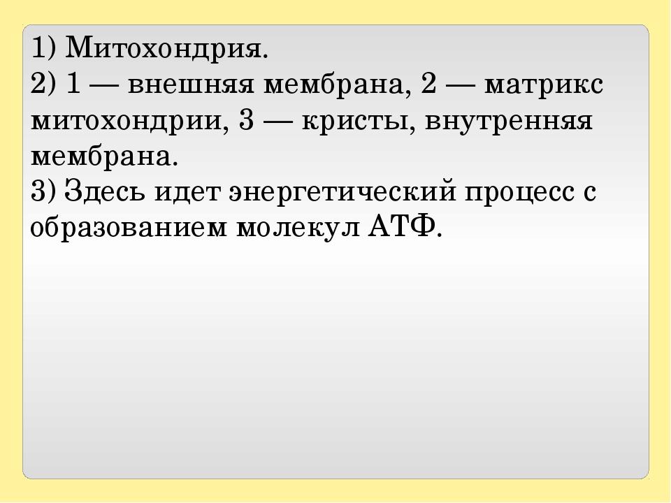 1) Митохондрия. 2) 1— внешняя мембрана, 2— матрикс митохондрии, 3— кристы...
