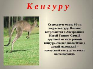 Существует около 60-ти видов кенгуру. Все они встречаются в Австралии и Ново