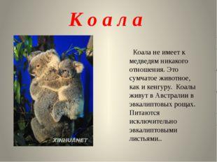 К о а л а Коала не имеет к медведям никакого отношения. Это сумчатое животное