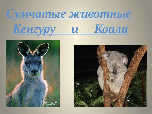 Сумчатые животные Кенгуру и Коала
