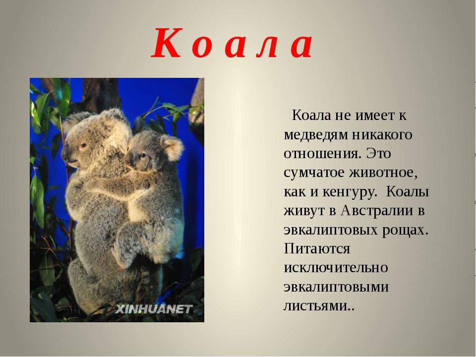 К о а л а Коала не имеет к медведям никакого отношения. Это сумчатое животное...